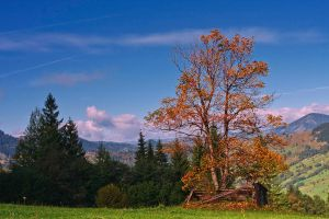 Autumn landscape. by lica20