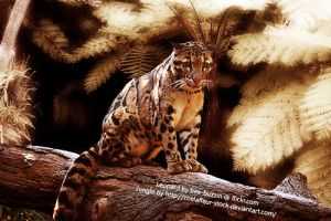 Clouded Leopard by legendpendragon9