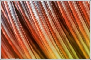 Wired by zoomzoom