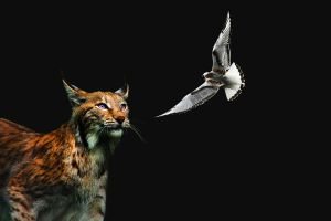 Lynx and a bird. by Chance-STOCK