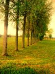 Trees by cherelleNME