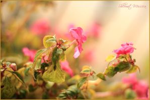 Spring delicacy by ShlomitMessica