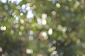 Nature bokeh texture 2013 by FrancescaDelfino