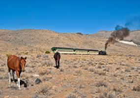 Wild  Horses and Steam Train 2 by MartinGollery