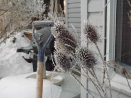 Frosted Teasel by Artsy50