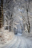 winter forest IV by Wilithin