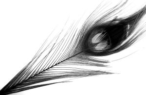 Peacock Feather by MayFrenzy