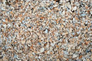 Shells texture 0021 by ronaldfrederick