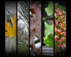 Autumn Leaves by uniguide