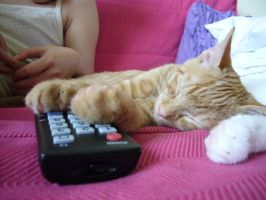 Tv Kitten by Strouze