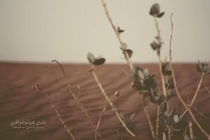 Desert by Blurry-Photography