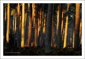 Tentsmuir Forest by Ballisticvole