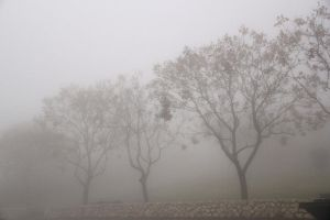 Trees in the fog 2 by yasminstock