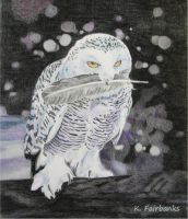 Snow Owl (color pencil drawing) by kfairbanks