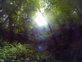 Sunlight through the trees by SP4RTI4TE