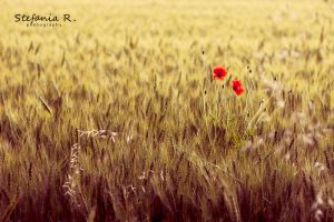 Two red spots by Stefania-R