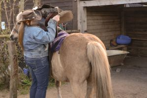 Grooming - Saddle Up a Draft Horse by LuDa-Stock