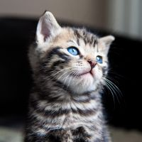 Our new cat! by TLO-Photography