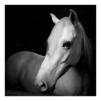 white shy horse by naturalselection