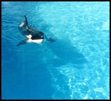 Killer Whale 0005 by JS-Creations