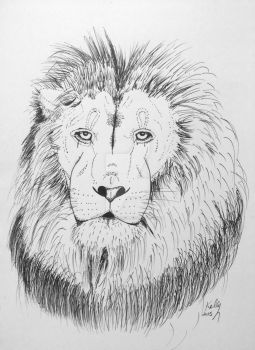 IMG 0272-Lion by KellyJDickinson