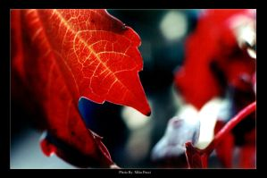 BlOoD LeaF by MikePecci