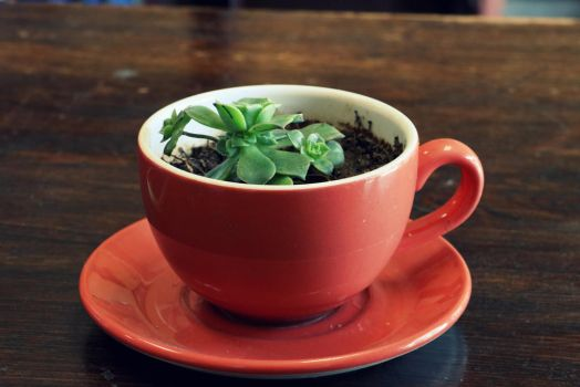 Succulent in a Cup by KingVahagn