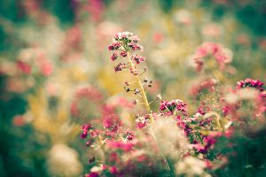flowers by damirarapovic
