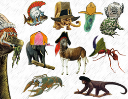 Animals Wearing Hats by MedusaJuice