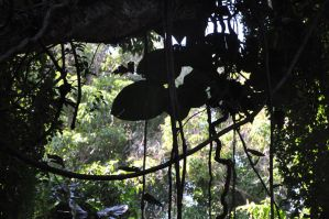 Hawaii Rainforest Stock 2 by Spiteful-Pie-Stock