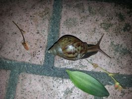 Snail 14Aug2014 9 by RiverKpocc