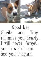 Good bye my puppies by NiccoRae77