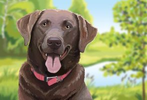 Labrador Retriever by ShelleyVPhoto