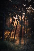 Forest At Sunset by Sylar113