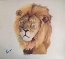 Lion by Juho-Lee