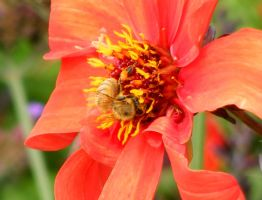 the bee by poeticwriter007