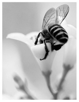 thirsty bee by TOYIB