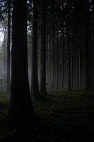 Forest Of Shadows by Husvik