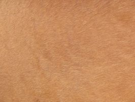 Horse skin Texture 01 stock by FrostBo