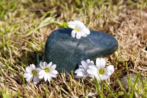 Nice Blue Rock with Flowers by wayner8088