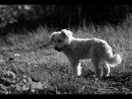 Shelly standing bw by Pawkeye