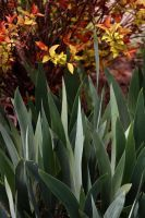 Leaves and Irises by kbhollo