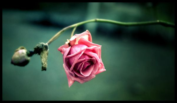 Flower by falname-stock by haxtrix6