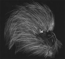 Eagle Scratch Board by TreeVor