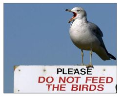 Seagull Protest by ravenwolf-song