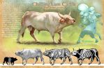 Chillingham Cattle by noiselessness