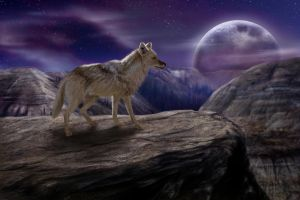 The Lone Coyote WIP6 by jocarra