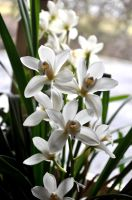 BraNcHe d'OrchiDee by Fre-D