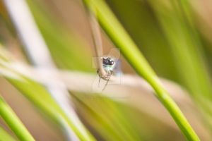Damselfly - Hanging About by CryogenicCactus