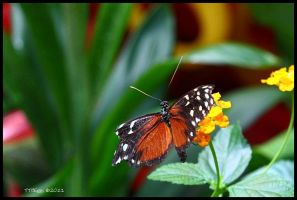 Butterfly 6 by TerryTee